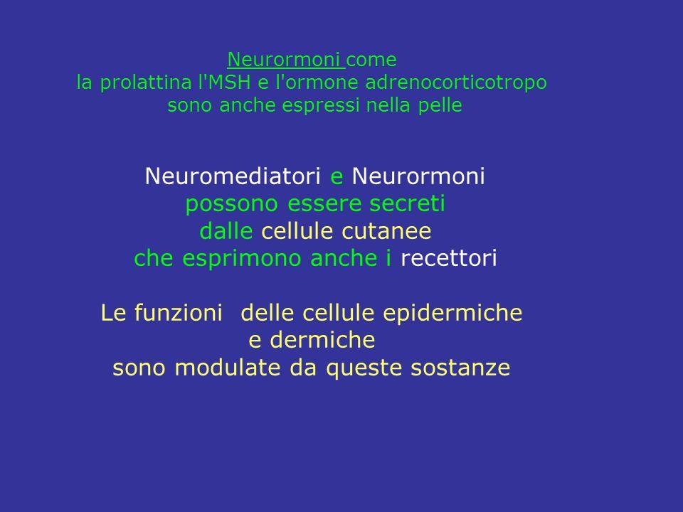Neurormoni come la prolattina l'MSH e l'ormone adrenocorticotropo sono anche espressi nella pelle Neuromediatori e Neurormoni possono essere secreti d