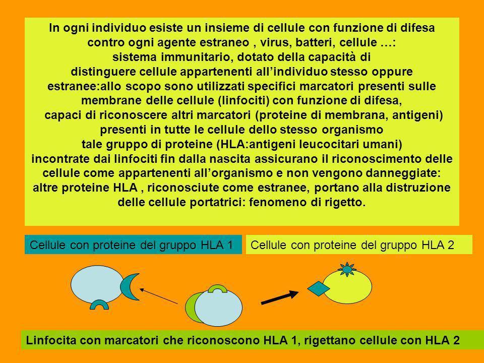 In ogni individuo esiste un insieme di cellule con funzione di difesa contro ogni agente estraneo, virus, batteri, cellule …: sistema immunitario, dot