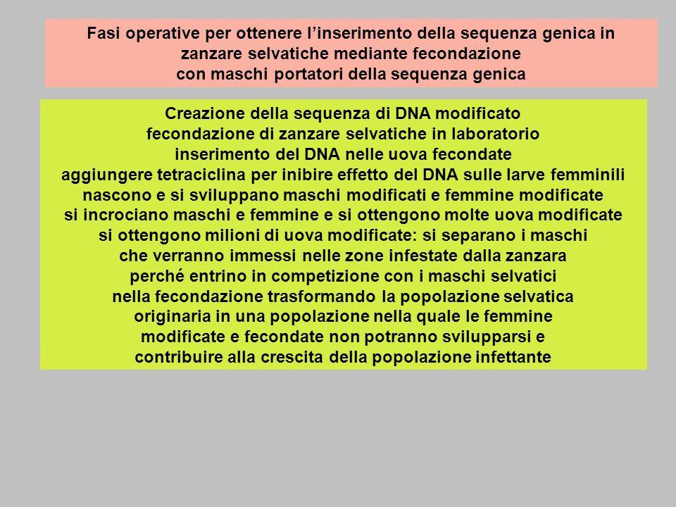 Fasi operative per ottenere linserimento della sequenza genica in zanzare selvatiche mediante fecondazione con maschi portatori della sequenza genica Creazione della sequenza di DNA modificato fecondazione di zanzare selvatiche in laboratorio inserimento del DNA nelle uova fecondate aggiungere tetraciclina per inibire effetto del DNA sulle larve femminili nascono e si sviluppano maschi modificati e femmine modificate si incrociano maschi e femmine e si ottengono molte uova modificate si ottengono milioni di uova modificate: si separano i maschi che verranno immessi nelle zone infestate dalla zanzara perché entrino in competizione con i maschi selvatici nella fecondazione trasformando la popolazione selvatica originaria in una popolazione nella quale le femmine modificate e fecondate non potranno svilupparsi e contribuire alla crescita della popolazione infettante