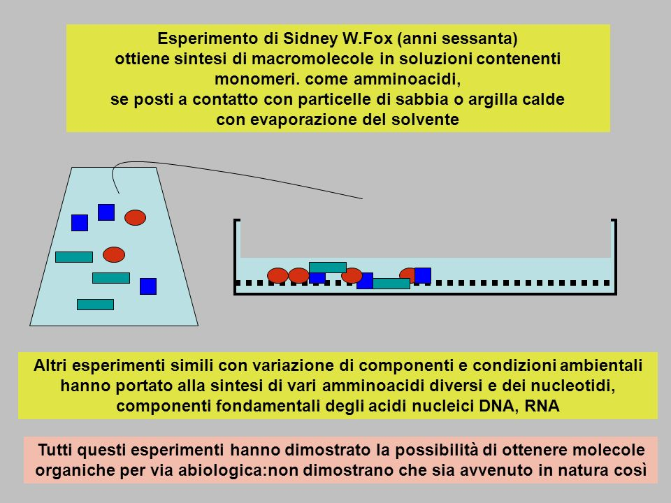Esperimento di Sidney W.Fox (anni sessanta) ottiene sintesi di macromolecole in soluzioni contenenti monomeri. come amminoacidi, se posti a contatto c