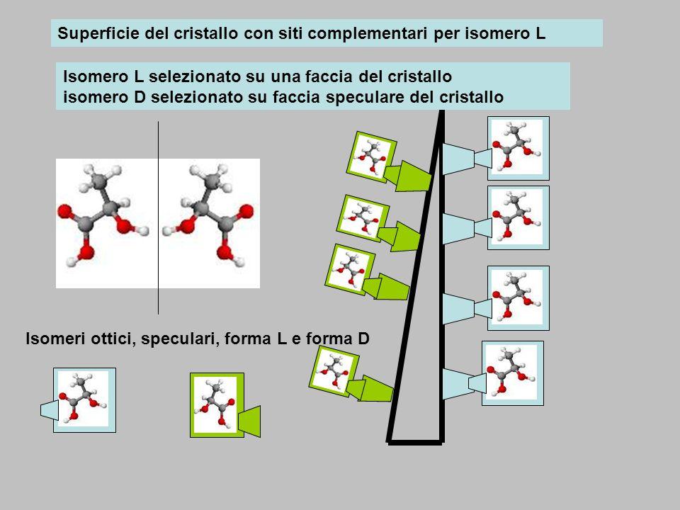 Isomeri ottici, speculari, forma L e forma D Superficie del cristallo con siti complementari per isomero L Isomero L selezionato su una faccia del cri