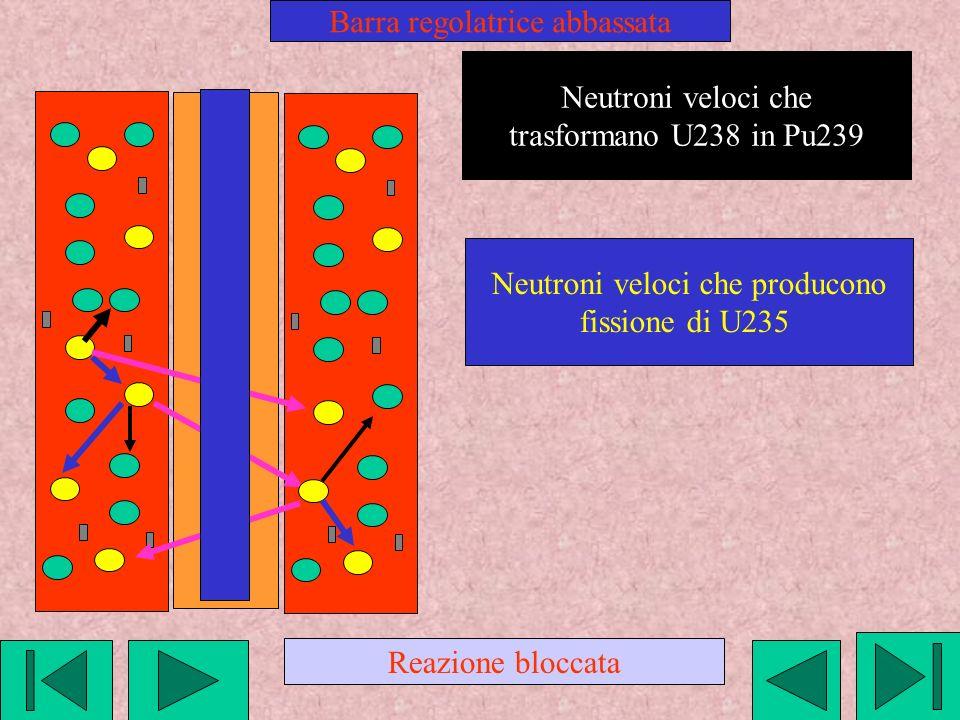 Neutroni veloci che trasformano U238 in Pu239 Neutroni veloci che producono fissione di U235 Barra regolatrice abbassata Reazione bloccata