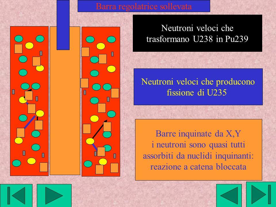 Neutroni veloci che trasformano U238 in Pu239 Neutroni veloci che producono fissione di U235 Barra regolatrice sollevata Barre inquinate da X,Y i neutroni sono quasi tutti assorbiti da nuclidi inquinanti: reazione a catena bloccata
