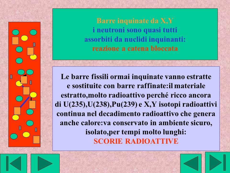 Barre inquinate da X,Y i neutroni sono quasi tutti assorbiti da nuclidi inquinanti: reazione a catena bloccata Le barre fissili ormai inquinate vanno estratte e sostituite con barre raffinate:il materiale estratto,molto radioattivo perché ricco ancora di U(235),U(238),Pu(239) e X,Y isotopi radioattivi continua nel decadimento radioattivo che genera anche calore:va conservato in ambiente sicuro, isolato,per tempi molto lunghi: SCORIE RADIOATTIVE