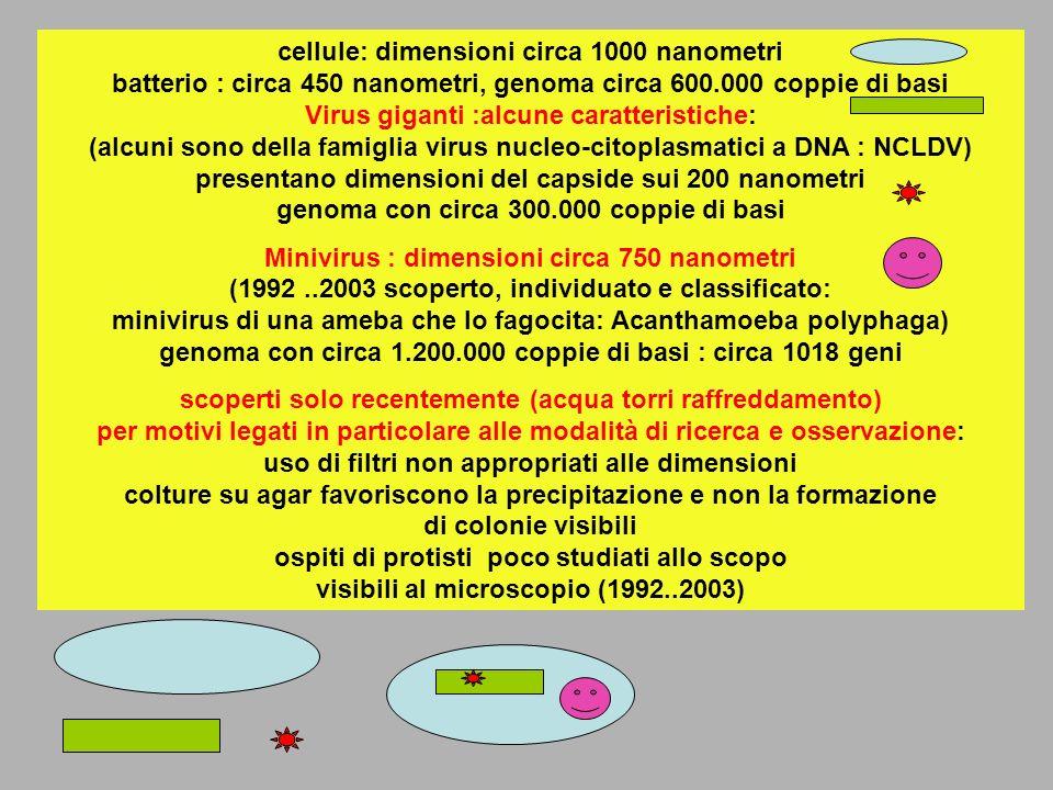 cellule: dimensioni circa 1000 nanometri batterio : circa 450 nanometri, genoma circa 600.000 coppie di basi Virus giganti :alcune caratteristiche: (a