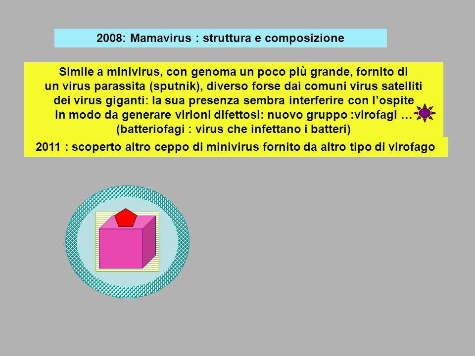 2008: Mamavirus : struttura e composizione Simile a minivirus, con genoma un poco più grande, fornito di un virus parassita (sputnik), diverso forse d