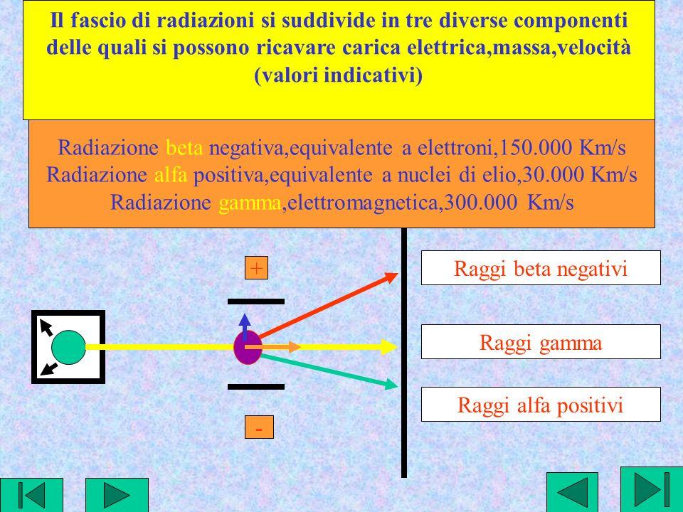 Raggi beta negativi Raggi gamma Raggi alfa positivi + - Il fascio di radiazioni si suddivide in tre diverse componenti delle quali si possono ricavare carica elettrica,massa,velocità (valori indicativi) Radiazione beta negativa,equivalente a elettroni,150.000 Km/s Radiazione alfa positiva,equivalente a nuclei di elio,30.000 Km/s Radiazione gamma,elettromagnetica,300.000 Km/s