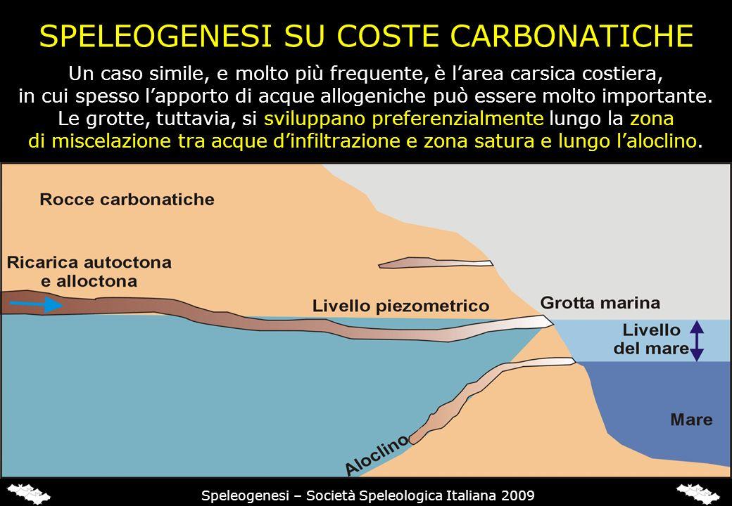 SPELEOGENESI SU COSTE CARBONATICHE Un caso simile, e molto più frequente, è larea carsica costiera, in cui spesso lapporto di acque allogeniche può essere molto importante.