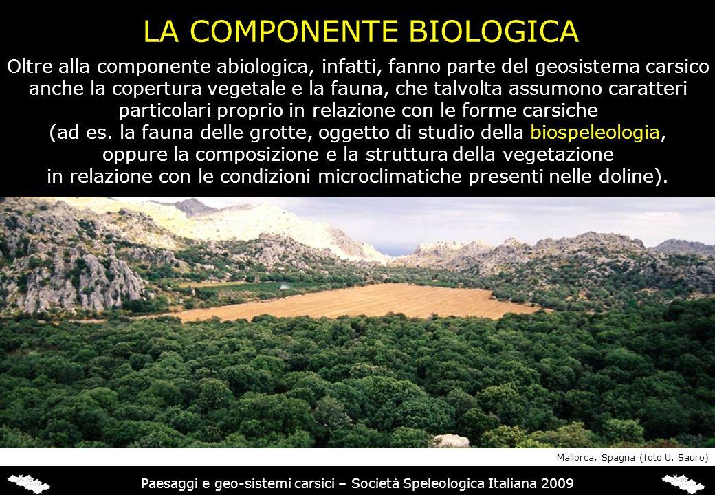 LA COMPONENTE BIOLOGICA Oltre alla componente abiologica, infatti, fanno parte del geosistema carsico anche la copertura vegetale e la fauna, che talv