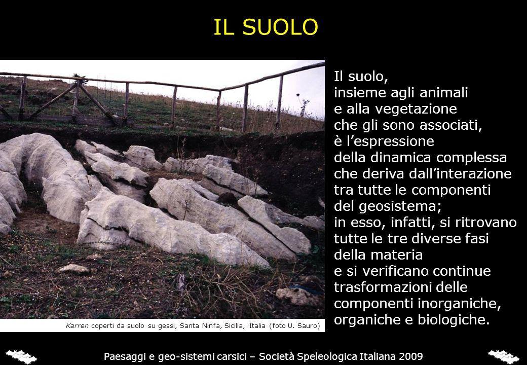 IL SUOLO Il suolo, insieme agli animali e alla vegetazione che gli sono associati, è lespressione della dinamica complessa che deriva dallinterazione
