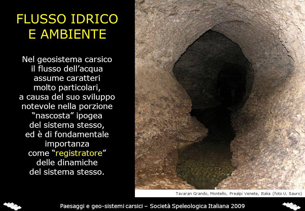 FLUSSO IDRICO E AMBIENTE Nel geosistema carsico il flusso dellacqua assume caratteri molto particolari, a causa del suo sviluppo notevole nella porzio