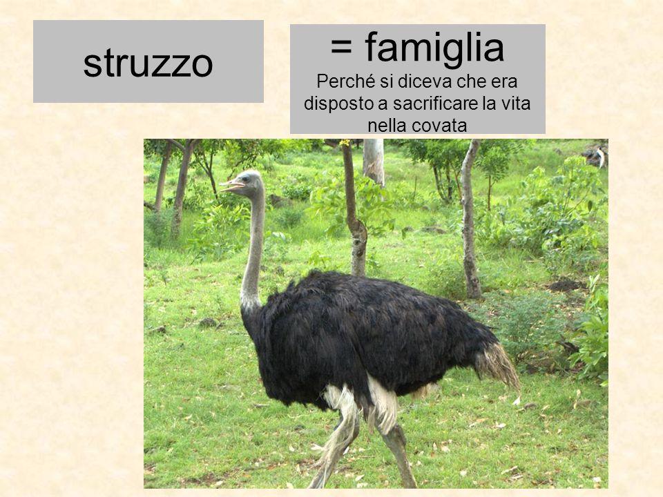 struzzo = famiglia Perché si diceva che era disposto a sacrificare la vita nella covata