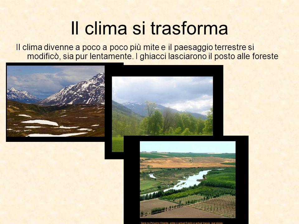 Il clima divenne a poco a poco più mite e il paesaggio terrestre si modificò, sia pur lentamente. I ghiacci lasciarono il posto alle foreste Il clima