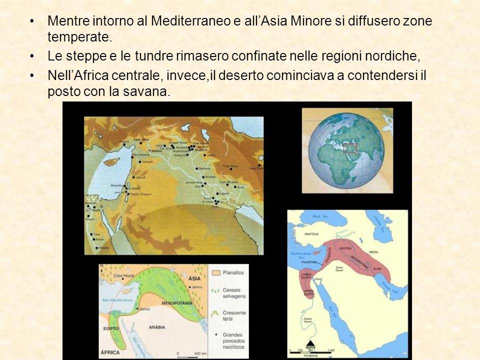 Mentre intorno al Mediterraneo e allAsia Minore si diffusero zone temperate. Le steppe e le tundre rimasero confinate nelle regioni nordiche, NellAfri