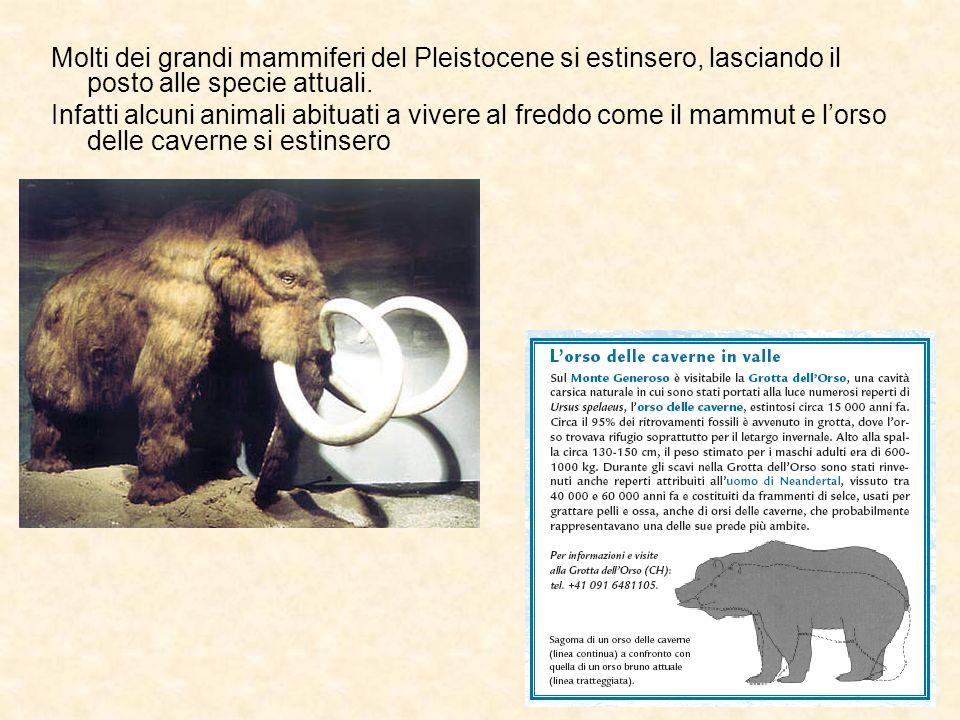 Molti dei grandi mammiferi del Pleistocene si estinsero, lasciando il posto alle specie attuali. Infatti alcuni animali abituati a vivere al freddo co