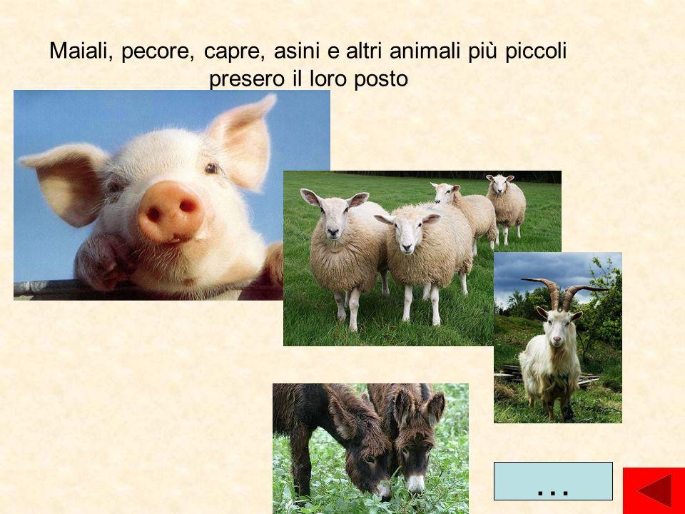 Maiali, pecore, capre, asini e altri animali più piccoli presero il loro posto …