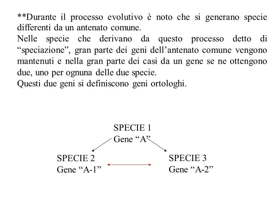 **Durante il processo evolutivo è noto che si generano specie differenti da un antenato comune.
