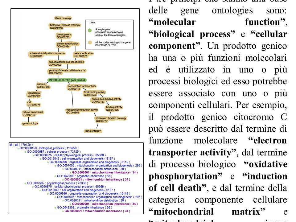 The ontologies I tre principi che stanno alla base delle gene ontologies sono: molecular function, biological process e cellular component.