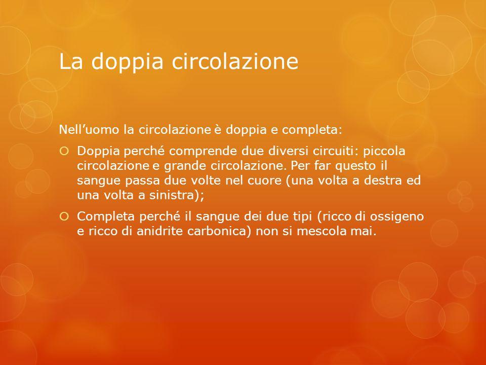 La doppia circolazione Nelluomo la circolazione è doppia e completa: Doppia perché comprende due diversi circuiti: piccola circolazione e grande circo