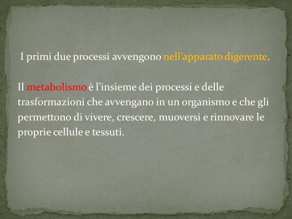 I primi due processi avvengono nellapparato digerente. Il metabolismo è linsieme dei processi e delle trasformazioni che avvengano in un organismo e c