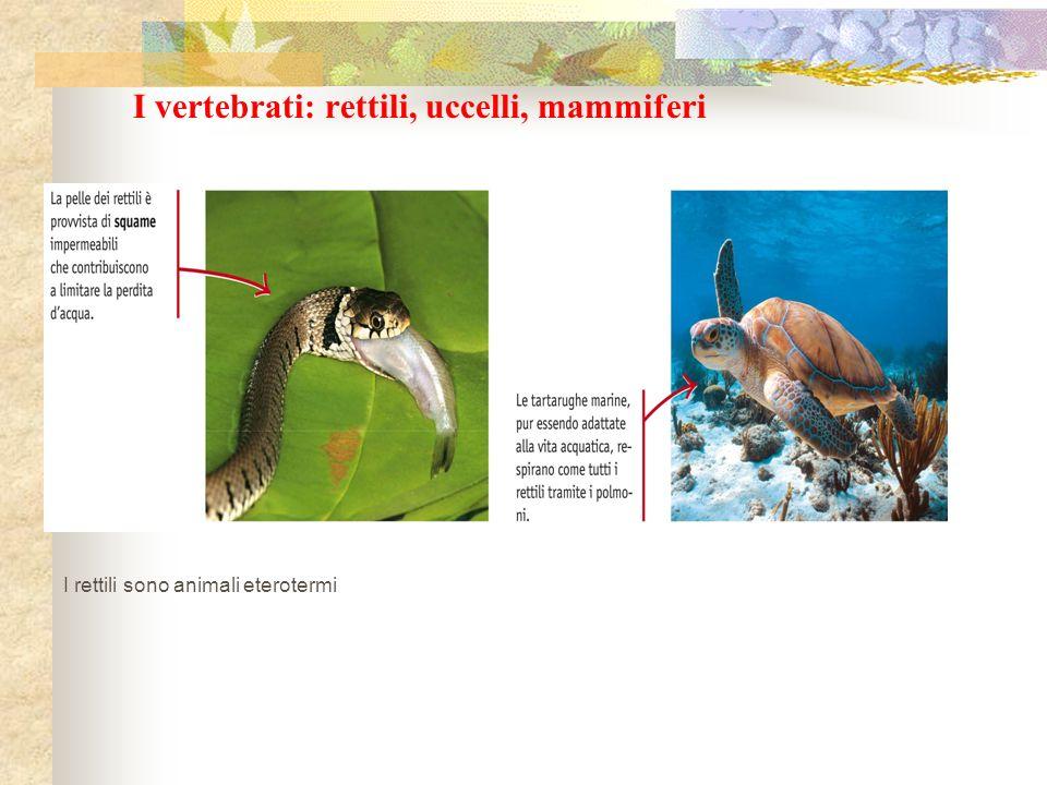 I vertebrati: rettili, uccelli, mammiferi I rettili sono animali eterotermi