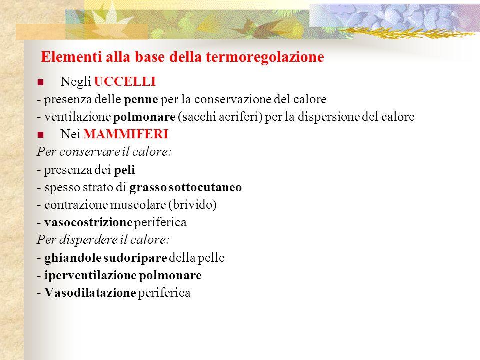Elementi alla base della termoregolazione Negli UCCELLI - presenza delle penne per la conservazione del calore - ventilazione polmonare (sacchi aerife