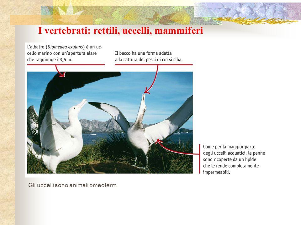 I vertebrati: rettili, uccelli, mammiferi Gli uccelli sono animali omeotermi