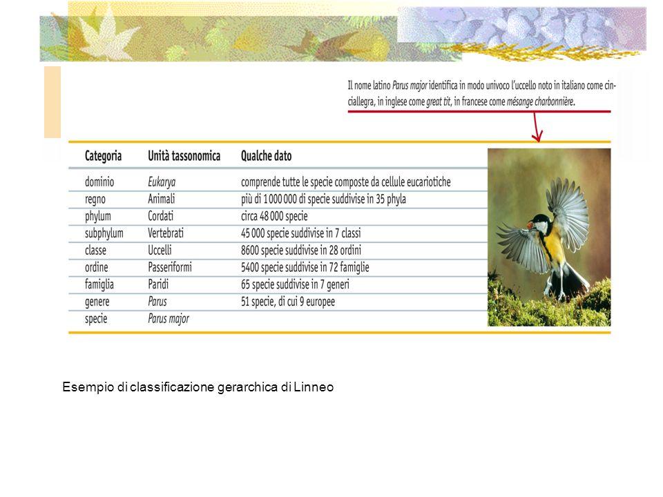 Tutte le specie conosciute appartengono a uno dei tre domini al vertice del sistema gerarchico di classificazione