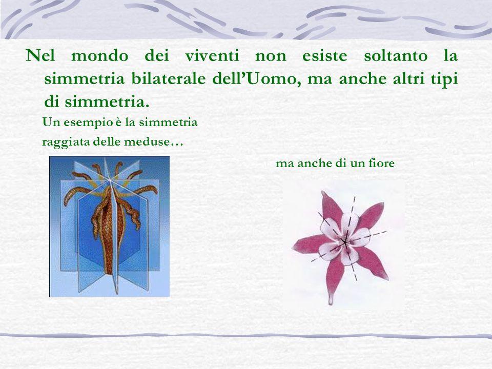 Nel mondo dei viventi non esiste soltanto la simmetria bilaterale dellUomo, ma anche altri tipi di simmetria. ma anche di un fiore Un esempio è la sim