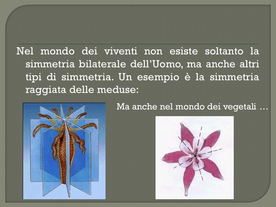 Nel mondo dei viventi non esiste soltanto la simmetria bilaterale dellUomo, ma anche altri tipi di simmetria.