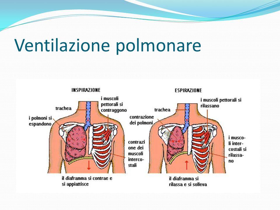 Ventilazione polmonare