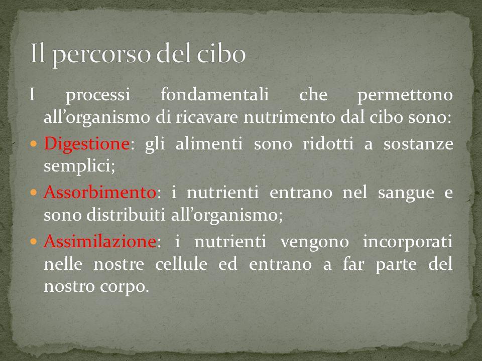 I processi fondamentali che permettono allorganismo di ricavare nutrimento dal cibo sono: Digestione: gli alimenti sono ridotti a sostanze semplici; Assorbimento: i nutrienti entrano nel sangue e sono distribuiti allorganismo; Assimilazione: i nutrienti vengono incorporati nelle nostre cellule ed entrano a far parte del nostro corpo.