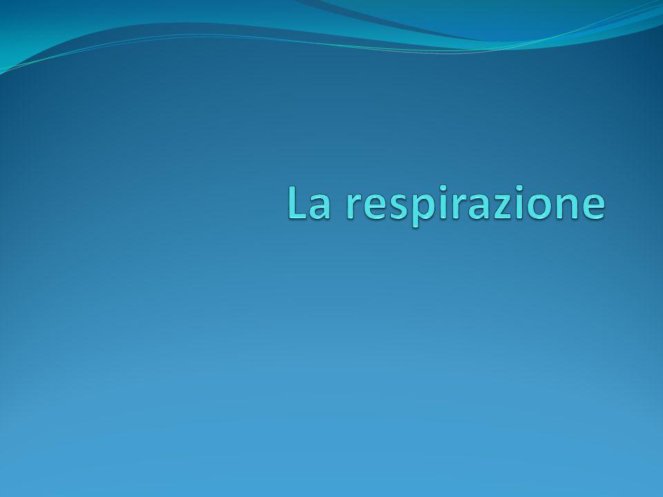 Funzione fondamentale degli organismi viventi per: Introdurre OSSIGENO nellorganismo; Espellere CO 2 dallorganismo.