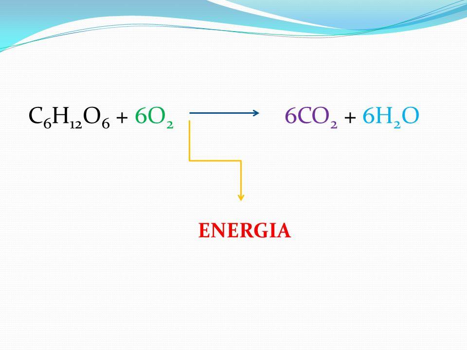 C 6 H 12 O 6 + 6O 2 6CO 2 + 6H 2 O ENERGIA