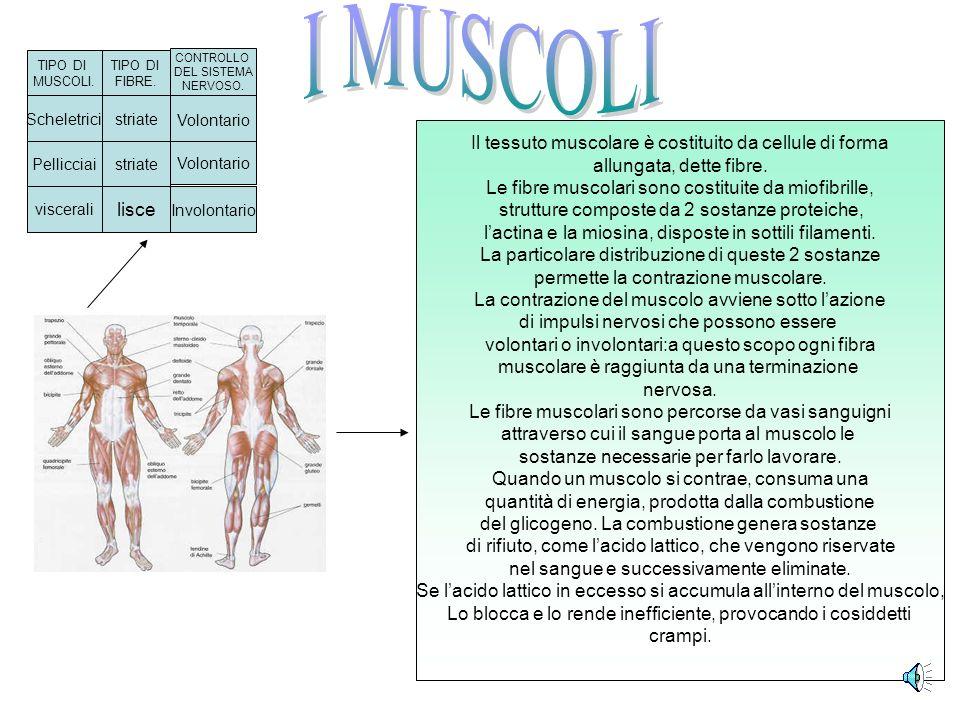 Le ossa sono costituite da due tessuti: Il tessuto osseo e il tessuto cartilagineo.