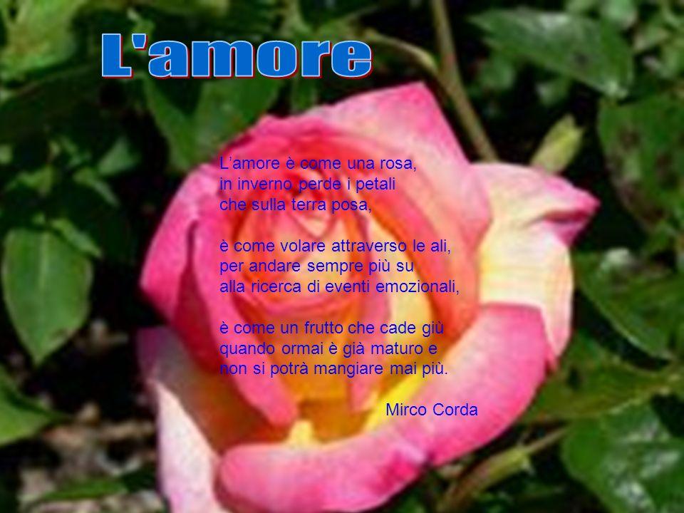 Lamore è come una rosa, in inverno perde i petali che sulla terra posa, è come volare attraverso le ali, per andare sempre più su alla ricerca di even
