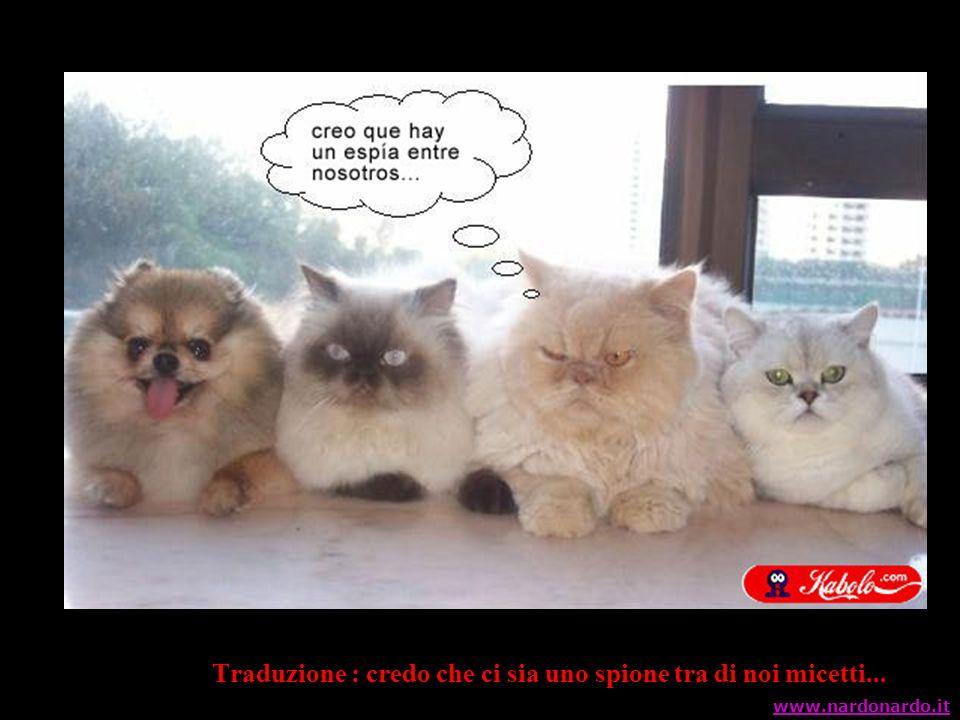 Traduzione : credo che ci sia uno spione tra di noi micetti... www.nardonardo.it