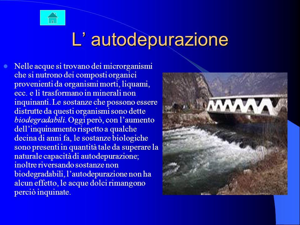 L inquinamento dellacqua Lacqua è senza dubbio la sostanza più comune e più diffusa nellambiente ed è inoltre una delle più importanti. Oltre ad esser