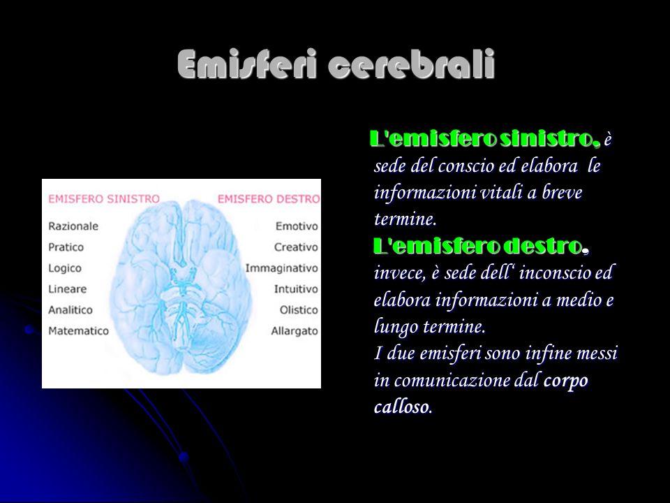 Emisferi cerebrali L'emisfero sinistro, è sede del conscio ed elabora le informazioni vitali a breve termine. L'emisfero destro, invece, è sede dell i