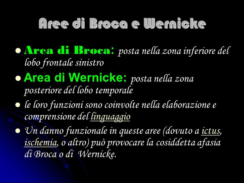 Aree di Broca e Wernicke Area di Broca : posta nella zona inferiore del lobo frontale sinistro Area di Wernicke: posta nella zona posteriore del lobo