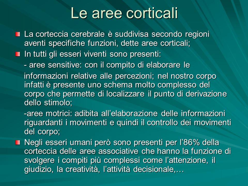 Le aree corticali La corteccia cerebrale è suddivisa secondo regioni aventi specifiche funzioni, dette aree corticali; In tutti gli esseri viventi son
