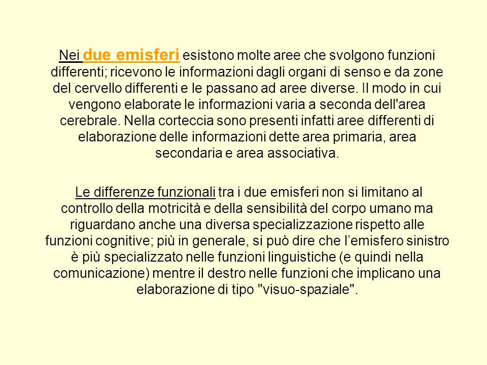 Nei due emisferi esistono molte aree che svolgono funzioni differenti; ricevono le informazioni dagli organi di senso e da zone del cervello different