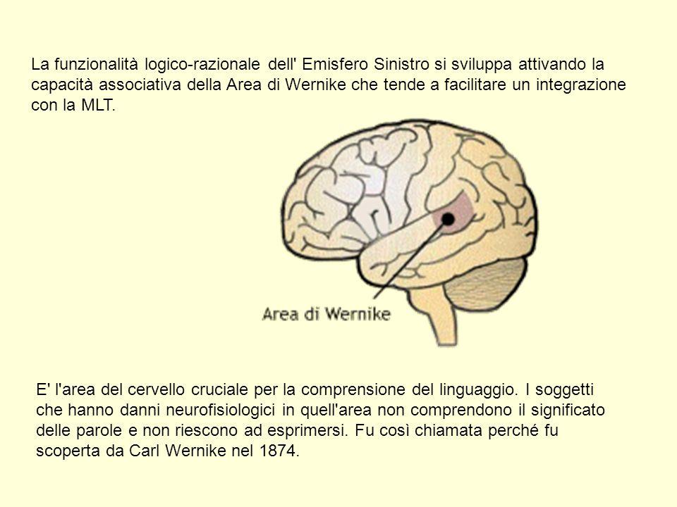 La funzionalità logico-razionale dell' Emisfero Sinistro si sviluppa attivando la capacità associativa della Area di Wernike che tende a facilitare un