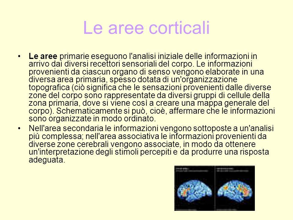 Le aree corticali Le aree primarie eseguono l'analisi iniziale delle informazioni in arrivo dai diversi recettori sensoriali del corpo. Le informazion