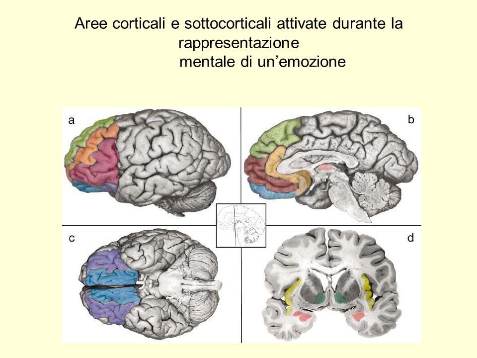 Aree corticali e sottocorticali attivate durante la rappresentazione mentale di unemozione