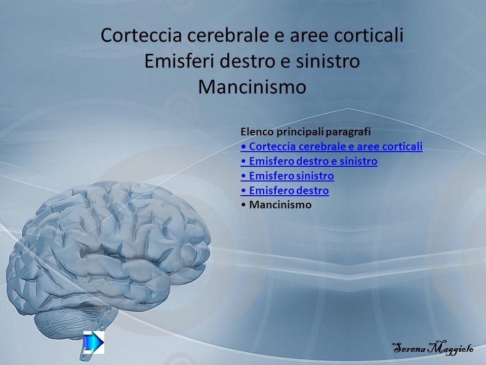 Corteccia cerebrale e aree corticali Emisferi destro e sinistro Mancinismo Serena Maggiolo Elenco principali paragrafi Corteccia cerebrale e aree corticali Emisfero destro e sinistro Emisfero sinistro Emisfero destro Mancinismo
