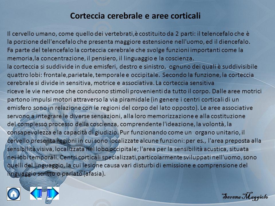 Corteccia cerebrale e aree corticali Il cervello umano, come quello dei vertebrati,è costituito da 2 parti: il telencefalo che è la porzione dell'ence