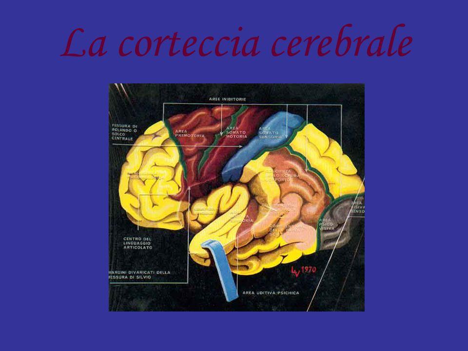 Struttura presente negli esserei vertebrati.