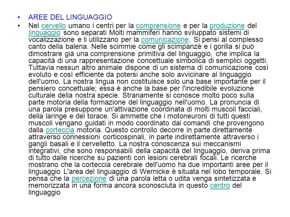 AREE DEL LINGUAGGIO Nel cervello umano i centri per la comprensione e per la produzione del linguaggio sono separati Molti mammiferi hanno sviluppato sistemi di vocalizzazione e li utilizzano per la comunicazione.