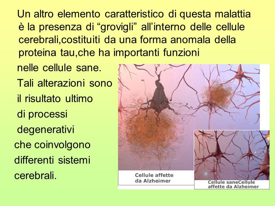 Un altro elemento caratteristico di questa malattia è la presenza di grovigli allinterno delle cellule cerebrali,costituiti da una forma anomala della proteina tau,che ha importanti funzioni nelle cellule sane.